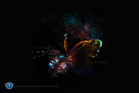 lionfish-wallapaper-1280