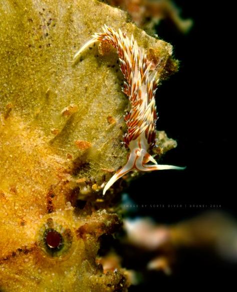 nudi-leaf